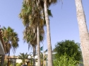Appartamenti Puerto Caleta esterno