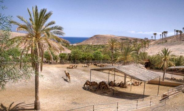 Oasis Park Fuerteventura - Parco Zoologico,giardino botanico Fuerteventura