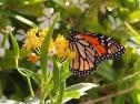 Oasis Fuerteventura Park - farfalla