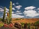 Oasis Fuerteventura Park - cactus