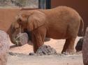 Oasis Fuerteventura Park - elefante
