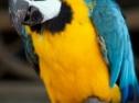 Oasis Fuerteventura Park - pappagallo
