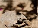 Oasis Fuerteventura Park - tartaruga