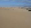 Parco Naturale delle Dune